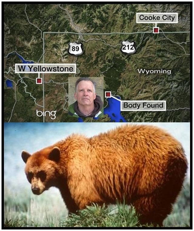 """In Pics&Clips :เหมือนเช่นมนุษย์ เยลโลว์สโตน จับตัว """"หมีกริซลี"""" ผู้ต้องหา """"กิน"""" นักท่องเที่ยว  เตรียมวัดอุ้งเท้า-ตรวจDNA ก่อนสำเร็จโทษตาย"""