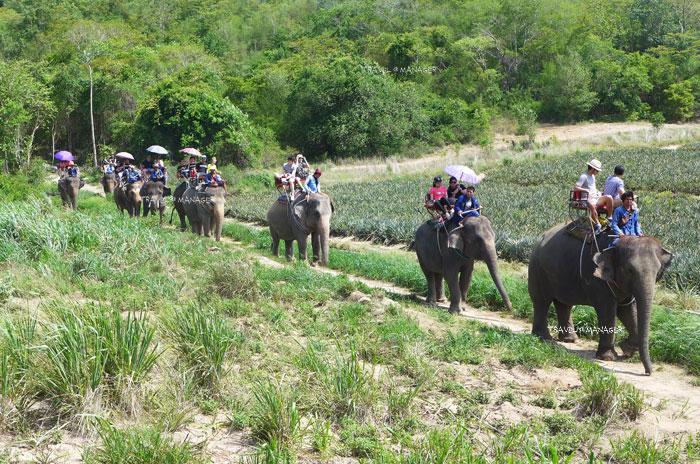 """Huahin Safari & Adventure Park""  ผจญภัยสนุกสนาน  ท่องไพรโลกซาฟารี"