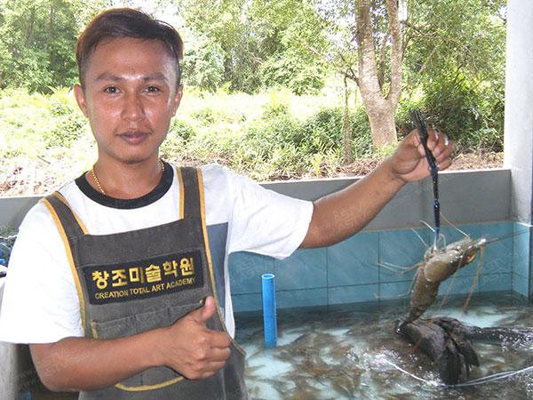 """อร่อยโคตรๆ! """"กุ้งแม่น้ำตรัง"""" เนื้อแน่น หวานธรรมชาติ หากินไม่ง่าย การันตีจากนักชิมทั่วไทย"""