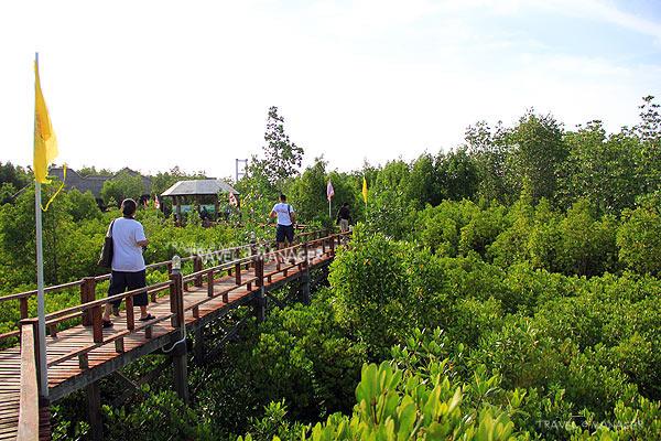 ป่าชายเลน(อ่าวทุ่งคา) อีกหนึ่งความสมบูรณ์ทางทรัพยาการของ อช.หมู่เกาะชุมพร