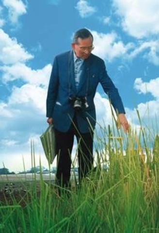 สมุนไพรไม้เป็นยา : หญ้าแฝกหอม ยับยั้งเชื้อรา ต้านเบาหวาน