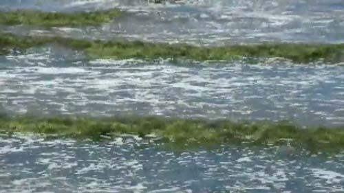 แพลงตอนบูมทะเลบางแสนรอบ 3 ในเดือนครึ่ง ปลาตายเป็นเบือ(ชมคลิป)