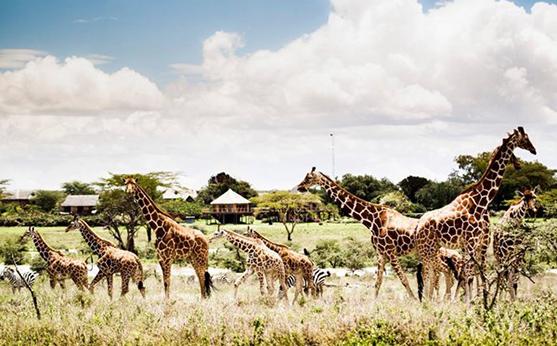 <FONT color=#00003>สวนสัตว์ใหญ่มีกำหนดลงเข็มปลายปีนี้ วินกรู๊ป (VinGroup) กลุ่มลงทุนในเวียดนาม ประกาศจะสร้างให้เป็นสวนสัตว์ใหญ่อันดับ 2 ของโลก แต่ก็ยังไม่ได้ให้รายละเอียดอื่นใดอีก.  </b>