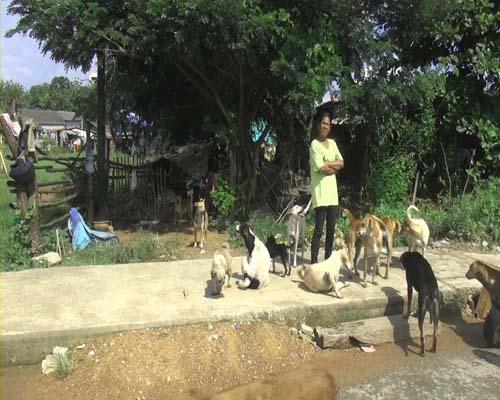 ป้าวัย 58 ปีวอนผู้ใจบุญช่วยเหลือสุนัขจรจัดกว่า 50 ตัวขาดแคลนอาหาร