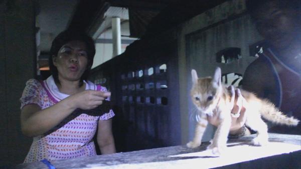 กู้ภัยปราณบุรีช่วยลูกแมวติดซอกกำแพงนาน 3 วัน