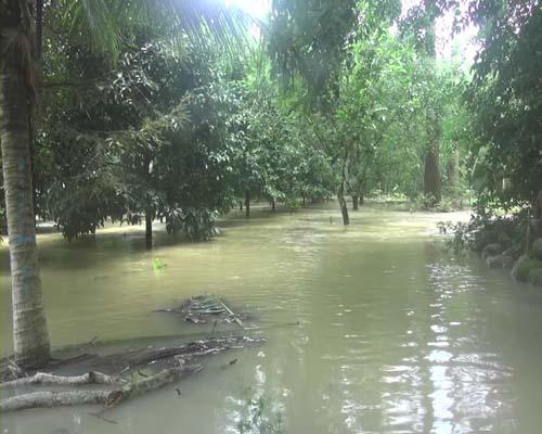 น้ำป่าไหลหลากเข้าท่วมสวนผลไม้กว่า 50 ไร่