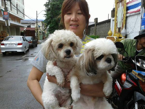 โรคพิษสุนัขบ้าระบาดเมืองโคราช ปศุสัตว์เร่งฉีดวัคซีน ชี้ติดเชื้อตายสถานเดียว