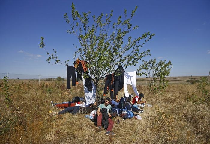 ผู้อพยพชาวซีเรียกลุ่มหนึ่งถูกบันทึกภาพขณะพักผ่อนอยู่ใต้ร่มไม้บนถนนสายหนึ่งใกล้เมืองเอดีร์เนของตุรกี ก่อนที่พวกเขาจะเดินทางมุ่งหน้าไปยังชายแดนกรีซ