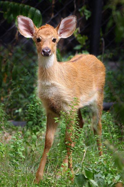 องค์การสวนสัตว์ฯ เร่งเดินหน้ารวบพันธุกรรมสัตว์หายาก