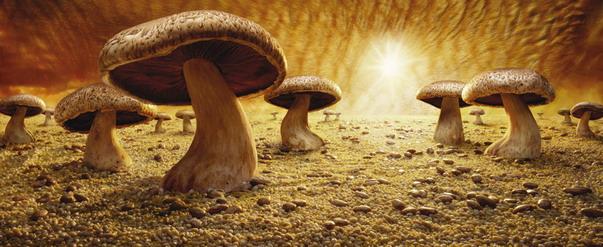 Mushroom Savanna ทุ่งเห็ด
