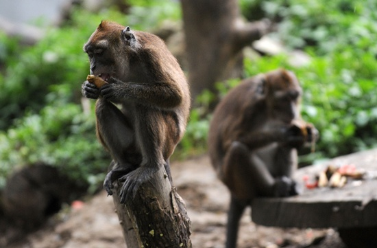 A monkey that sneezes when it rains and a walking fish are among more than 200 species discovered in the fragile eastern Himalayas in recent years, according to conservation group WWF. -- Photo: AFP