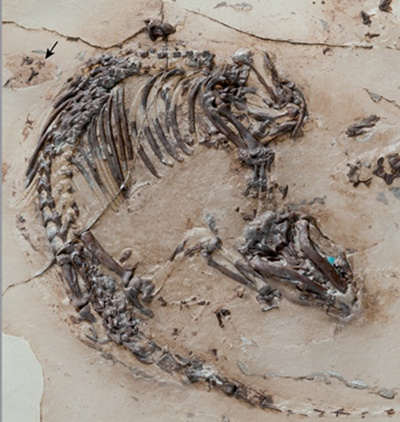 Baby dinosaur fossils found in 'Dragon's Tomb'