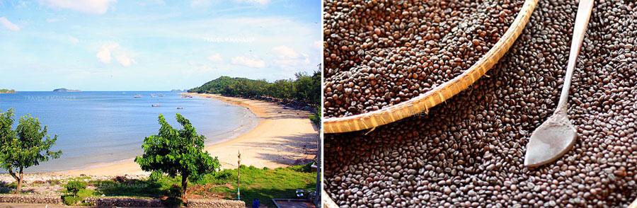 ชุมพร หาดทรายสวยสี่ร้อยลี้ เชื่อมโยงกับระนอง การท่องเที่ยวทางทะเล/เกาะและสวนกาแฟ