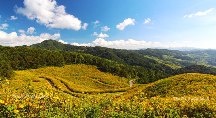 """เหลืองทั้งดอย!!! """"เทศกาลดอกบัวตองดอยแม่อูคอ"""" ตื่นตาทุ่งดอกบัวตองใหญ่สุดในไทย"""