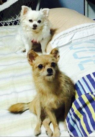 พี่ซันกับน้องขวัญของแม่ (พี่อ้วนกับยายลิงของหมอ)