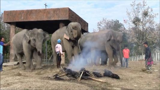 ผู้บริหารไนทซาฟารีแจงช้างแสดงโชว์วันแรกเกิดตื่นตกใจเหยียบนักท่องเที่ยวเจ็บระนาว