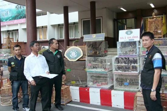 ยึดนกสัตว์ป่าคุ้มครอง 329 ตัว กลางตลาดสวนจตุจักร มูลค่า 8 หมื่นบาท