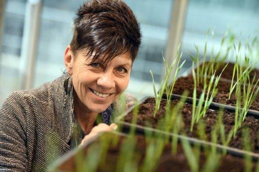 จิล ฟาร์แรนต์ ผู้คาดหวังว่ายีนของพืชคืนชีพจะช่วยเกษตรกรรับมือกับการเปลี่ยนแปลงภูมิอากาศได้  (AFP / Stephanie Findlay)