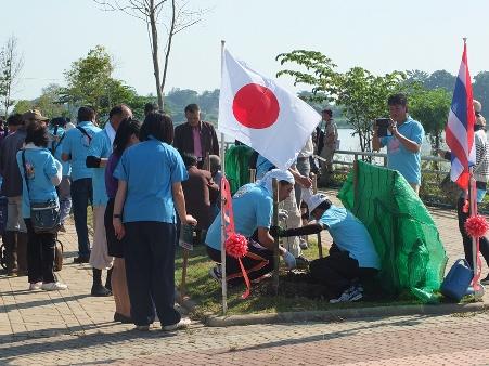 """มาอีก 600 ต้น! สมาคมฯ ญี่ปุ่นขน """"ซากุระพันธุ์แท้"""" ปลูกริมน้ำกกเพิ่ม"""