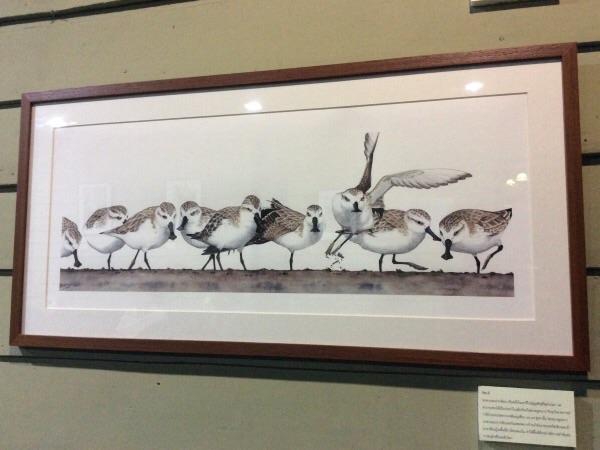 รู้จักนกใกล้สูญพันธุ์ผ่านปลายพู่กันศิลปินรุ่นใหม่
