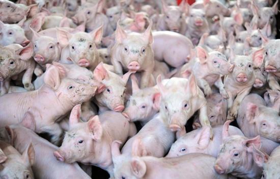Iran swine flu outbreak kills 33 in three weeks: state media