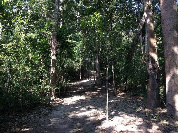 ชาวบ้านจะช่วยกันถางหญ้า เพื่อให้พื้นป่ามีช่องว่างอย่างน้อย 3-5 เมตร เพื่อเป็นแนวกันไฟป่าลุกลาม