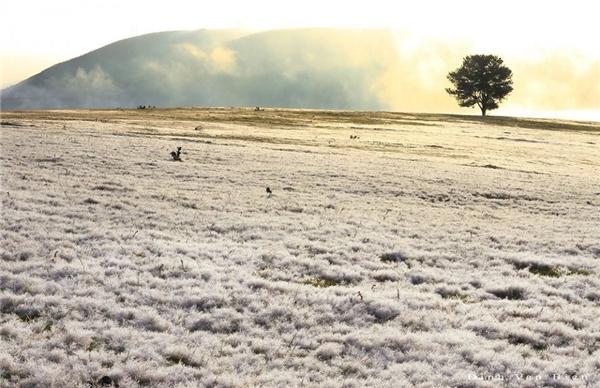 สุดแสนโรแมนติก เวียดนับพันๆ แห่ไปชมทุ่งแม่คะนิ้งในด่าลัต ปีนี้ไม่หนาวแต่ขาวโพลนไปทั่ว
