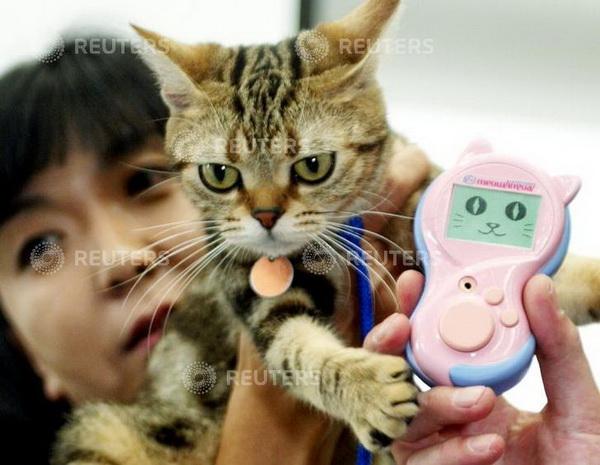 ทาสแมวเงิบ! สั่งซื้อแมวพันธุ์หรูทางออนไลน์ แต่กลับได้เหมียวบ้านๆ ไร้วิญญาณ