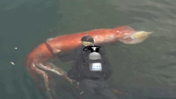 ตะลึงตึงๆ! ชาวประมงญี่ปุ่นอึ้งเจอปลาหมึกยักษ์ยาว 4 เมตร [ชมคลิป]