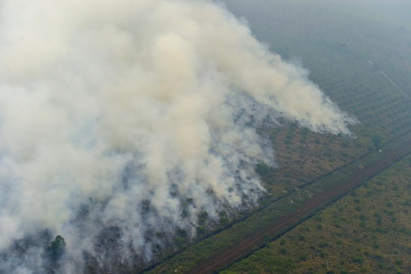 ภาพถ่ายจากเฮลิคอปเตอร์ของสำนักงานบรรเทาภัยพิบัติอินโดนีเซีย เผยให้เห็นไฟป่าบริเวณพื้นที่สัมปทานในเมืองปาลาลาวัน จังหวัดริเอา เมื่อวันที่ 17 ก.ย. ปี 2015 รัฐบาลอินโดนีเซียได้ใช้มาตรการลงโทษบริษัทกว่า 20 แห่งที่พัวพันการเผาป่า จนก่อวิกฤตหมอกควันครั้งใหญ่ในปีนี้