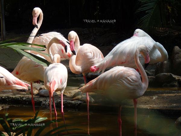 """""""นกฟลามิงโก"""" มีขนสีชมพูหวานแหวนน่ามอง"""