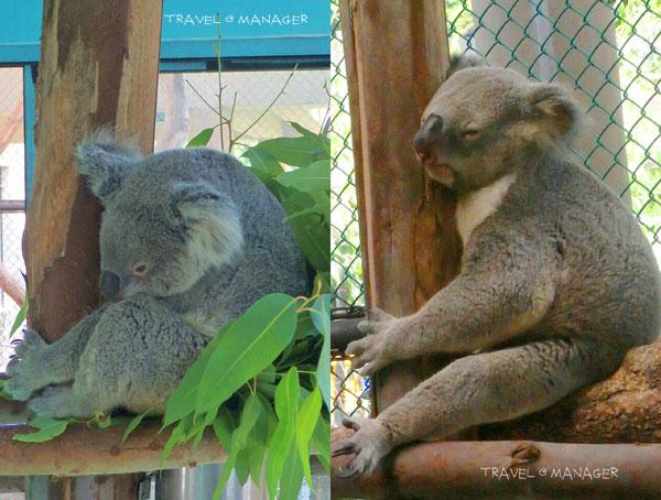 """""""หมีโคล่า""""  ซ้าย : """"เวียงพิงค์""""  ขวา : """"ฟูลล่า"""""""