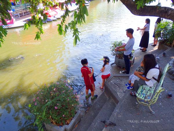 บรรยากาศการนักท่องเที่ยวให้อาหารปลา