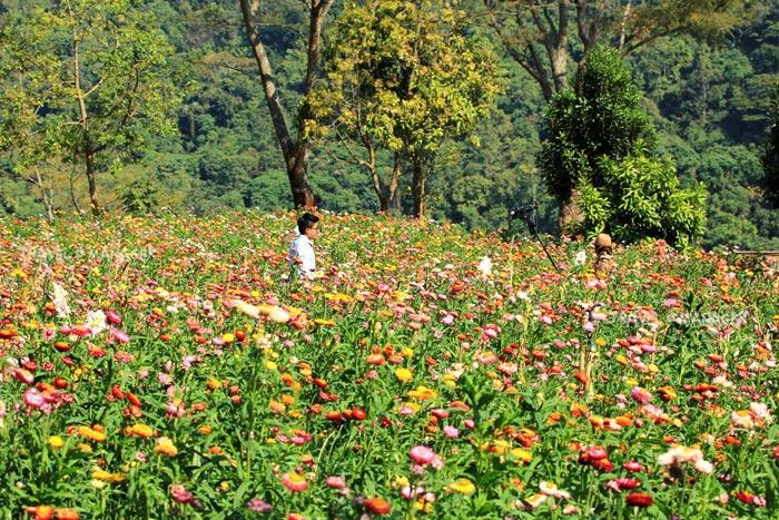 """ซากุระเมืองไทยภูลมโล-ผาแห่งรัก-ทุ่งดอกกระดาษ มุมต้องห้ามพลาดที่ """"ภูหินร่องกล้า""""/ปิ่น บุตรี"""