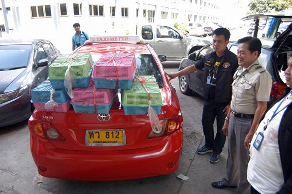 รวบแท็กซี่ลักลอบขนนกกรงหัวจุก ส่งสวนจตุจักร