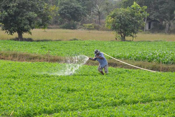 ออเดอร์ล้น! ภัยแล้งส่งผลดีต่อเกษตรกรปลูกข้าวโพดเลี้ยงสัตว์ขายได้ราคาดี