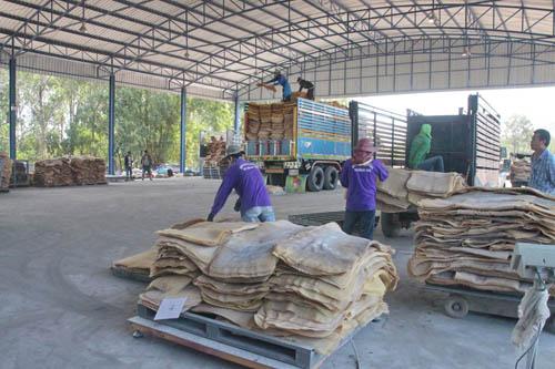ชาวสวนยางแปดริ้วเมินจุดรับซื้อยางพารารัฐ แห่ขายสหกรณ์การเกษตรคึกคัก