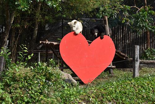 สวนสัตว์เปิดเขาเขียวจัดกิจกรรมชวนนักท่องเที่ยวส่งมอบความรักให้สัตว์ป่า