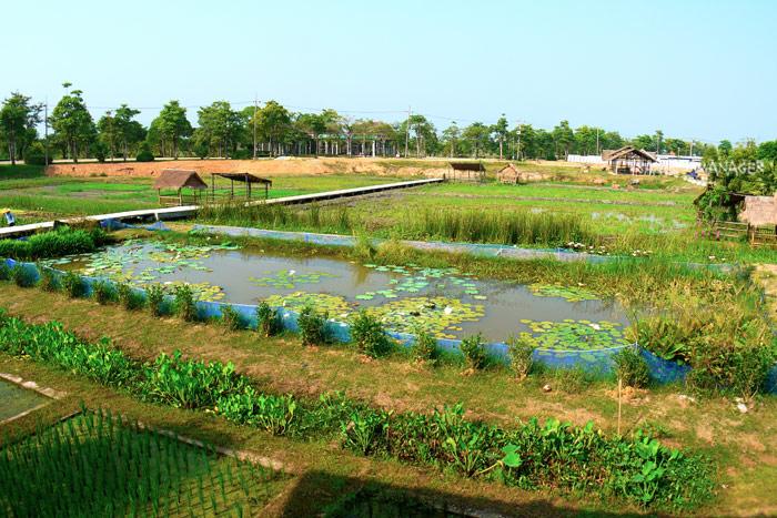 แปลงเกษตรปลอดสารเคมี พึ่งพาธรรมชาติในโครงการเกษตรอินทรีย์สนามบินสุโขทัย
