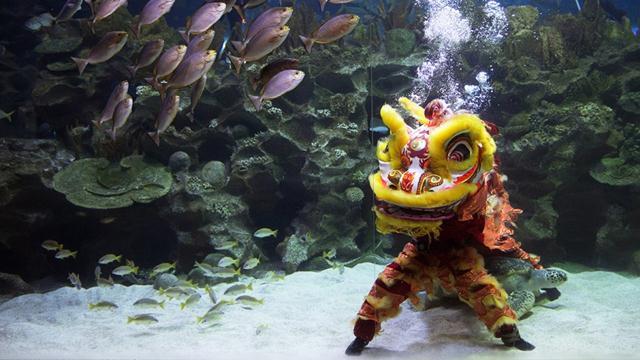 การแสดงเชิดสิงโตระหว่างเทศกาลตรุษจีน ในสวน Aquaria KLCC กัวลาลัมเปอร์ ประเทศมาเลเซีย (ภาพ เอพี)