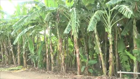 อยุธยาเตรียมขยายเครือข่ายปลูกพืชใช้น้ำน้อยหลังประสบผลสำเร็จ