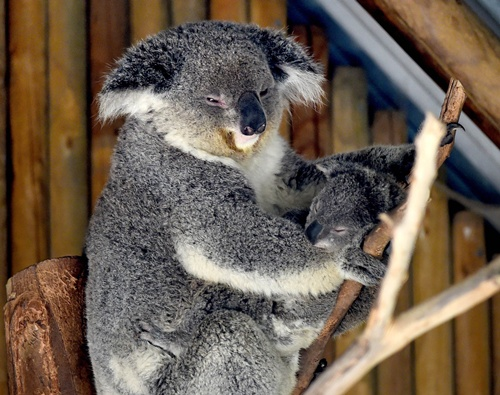 Australia's 'ugly' animals attract less study