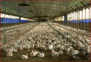 """""""บิ๊กตู่"""" เซ็นตั้งคณะกรรมการส่งเสริมและพัฒนาเกษตรพันธสัญญาที่เป็นธรรม"""