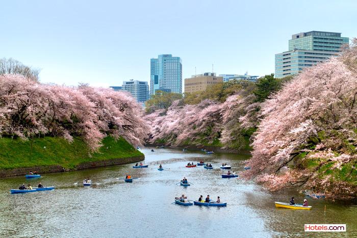 ทางเลือกชั้นดี เที่ยวญี่ปุ่น ชมซากุระบาน เลือกที่พักโดนใจ