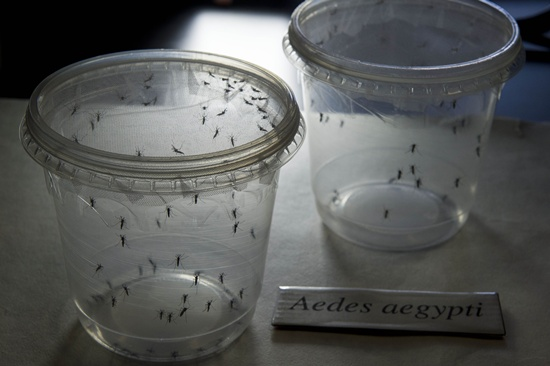 Zika virus 'scarier' than thought: US health officials