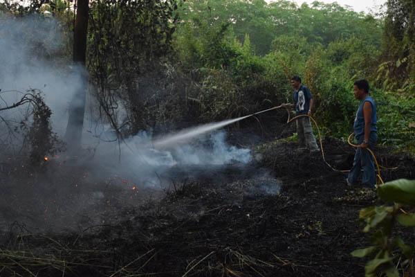 เกิดเหตุไฟป่าตราดและระยองลามเข้าสวนผลไม้-สวนยางชาวบ้าน