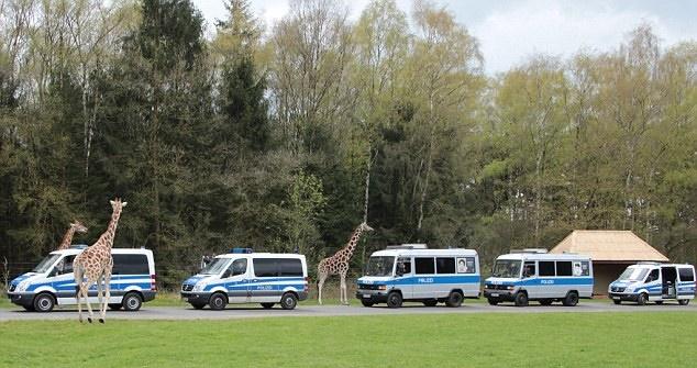 "In Pics:  กรีซส่งลี้ภัยล็อต 3 กลับเพิ่ม 49 คน - สุดอึ้ง!ตร.เยอรมันสยองอดีตศูนย์อพยพ!! ""มีทั้งคราบอสุจิ เลือด อุจจาระ"" หลบโอบามาไปนอนในสวนสัตว์เปิดแทน"