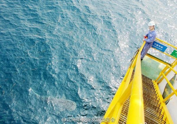 คนงานบนแท่นขุดเจาะน้ำมันถ่ายภาพคู่กับฉลามวาฬ ซึ่งคนงานเผยว่ามันมักแวะเวียนมาหาในช่วงเดือนพ.ค. ของทุกปี