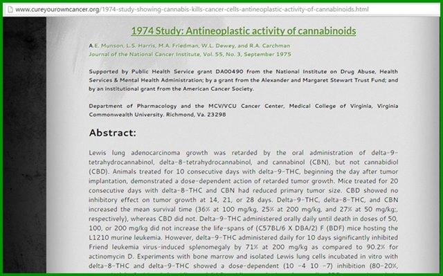 อเมริกาค้นพบว่า กัญชามีผลในการฆ่าเซลล์มะเร็ง ในปี ค.ศ. 1974