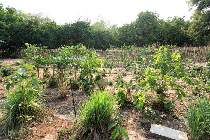 แปลงปลูกพืชสมุนไพร บ้านน้ำเกี๋ยน